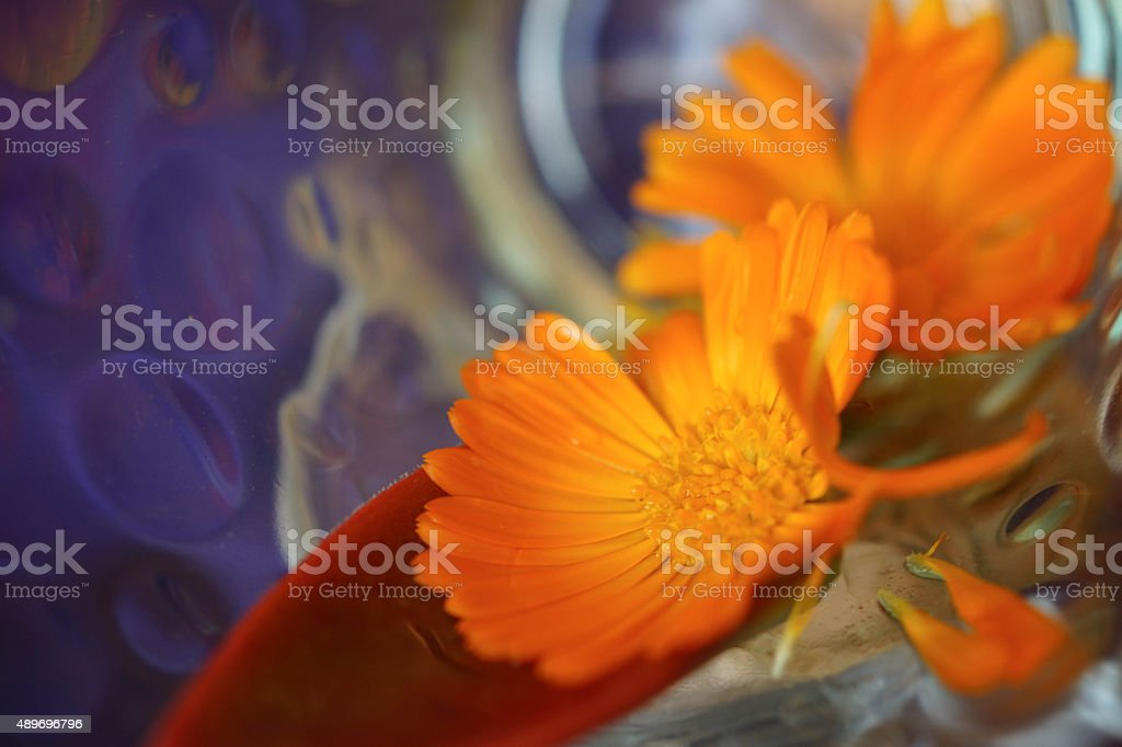 Orange flower with reflections stock photo