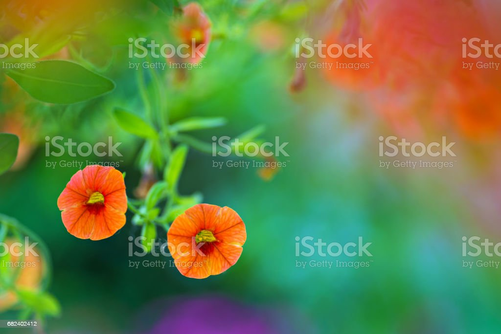 Orange flowers in nature royalty-free stock photo