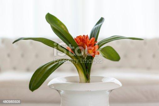 1164401366 istock photo Orange flowers 480985505