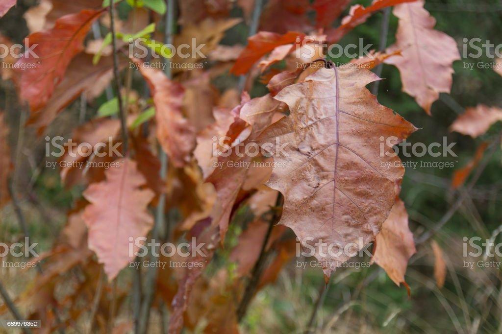 orange foilage stock photo
