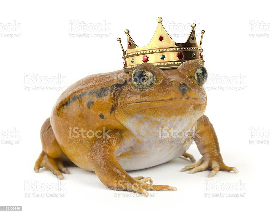 Orange Frog stock photo