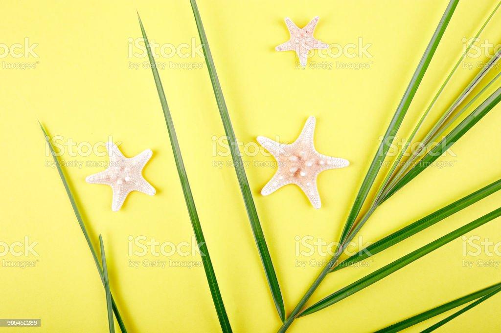 Orange fruit, starfish and palm leaves zbiór zdjęć royalty-free