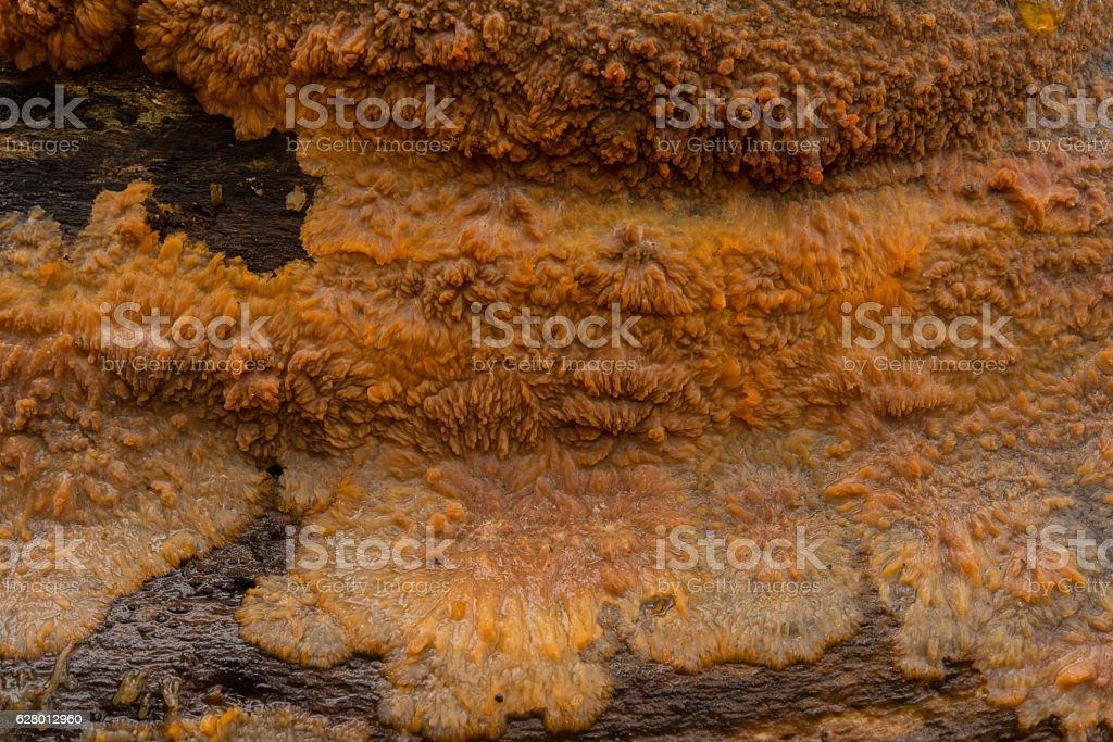 Orange fungi on dead wood stock photo