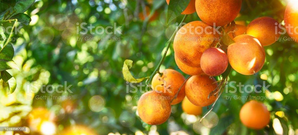 Orange Garden Summer Background Stock Photo & More Pictures of ...