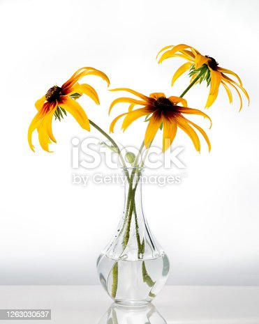 Orange gardens daisies rudbeckia Black-Eyed Susan flowers in a vase on white background artistic still life . High quality photo