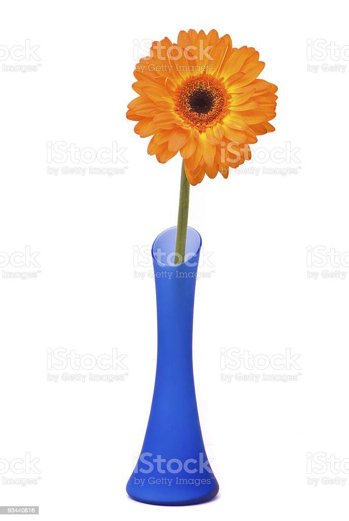 Orange gerber Blumen in blauer vase auf weißem Hintergrund Lizenzfreies stock-foto