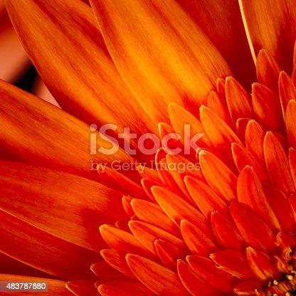 Macro Photo Of Orange Red Gerbera Flower CloseUp Detail Petals Background