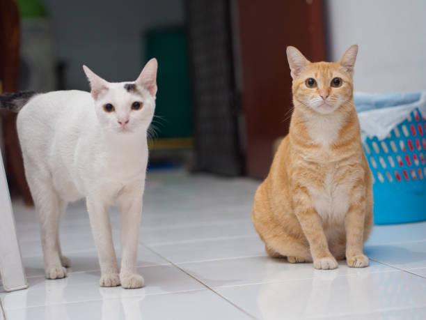Laranja gengibre gato sentado - foto de acervo
