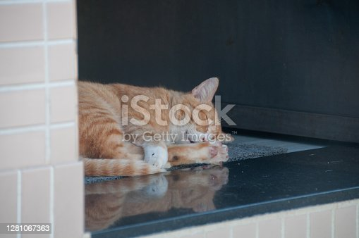 istock Orange golden tiger stripped pattern fur feline cat sleep on house floor in the afternoon 1281067363