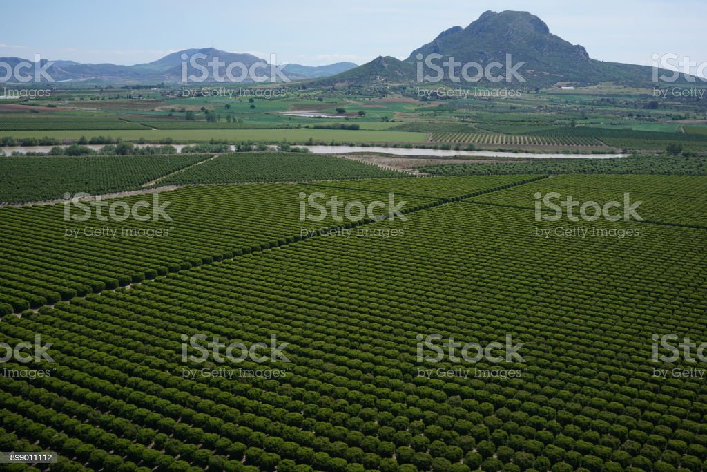 Orange Grove - Photo