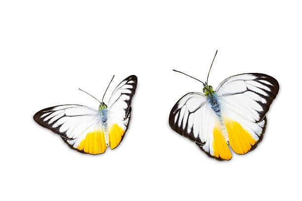 Orange gull butterfly picture id467289329?b=1&k=6&m=467289329&s=612x612&w=0&h=fjd6sazcsc85 5n4tl4oju9dsa6bwpmv998l3vpogqu=