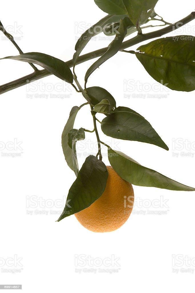 Arancio appeso basso foto stock royalty-free