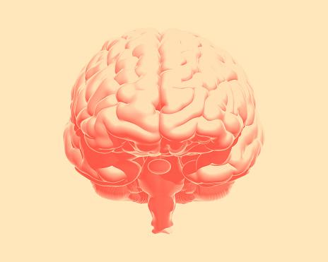 692684668 istock photo Orange human brain illustration isolated on vanilla BG 1168089640