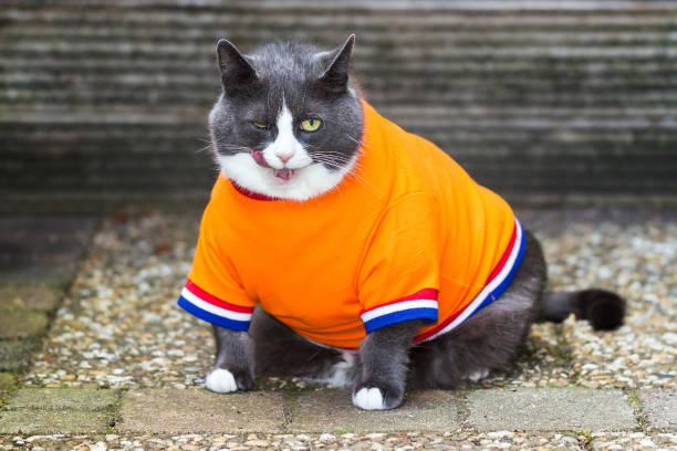 Orange is the new fat picture id649687282?b=1&k=6&m=649687282&s=612x612&w=0&h=nc9s8huova6kmkxvejulieng3ephbsy3r1ker8y0psa=