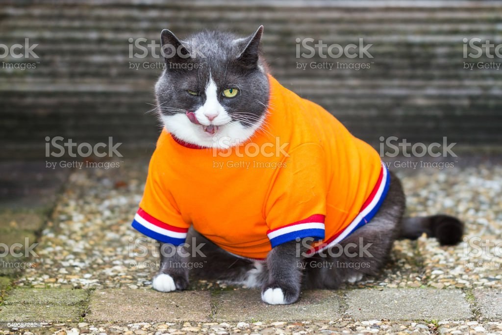 Orange is the new fat stock photo