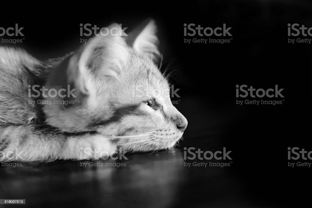 énormes queues noires dans la chatte blanche