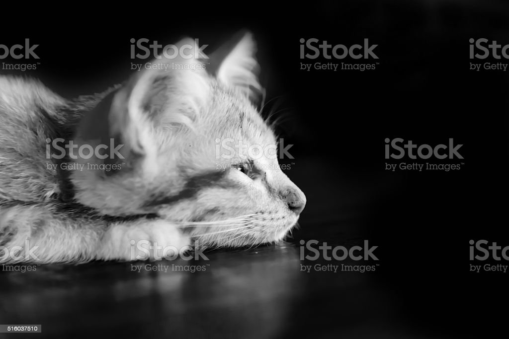 Orange kitten cat lie on wood ground stock photo