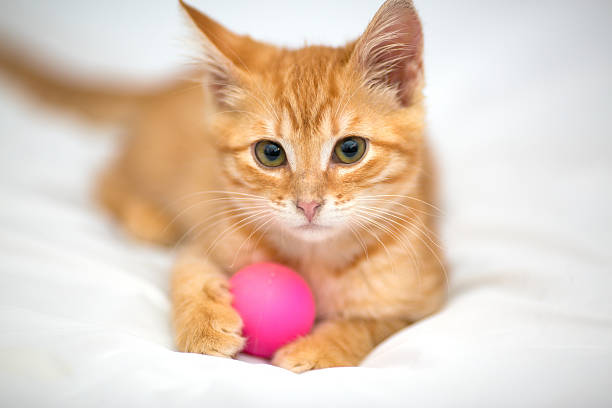 Orange kitten with a ball picture id465015037?b=1&k=6&m=465015037&s=612x612&w=0&h=gfooe6arrai5bzg63t8tykg2sg9kt0irhoo2dyg6xwu=