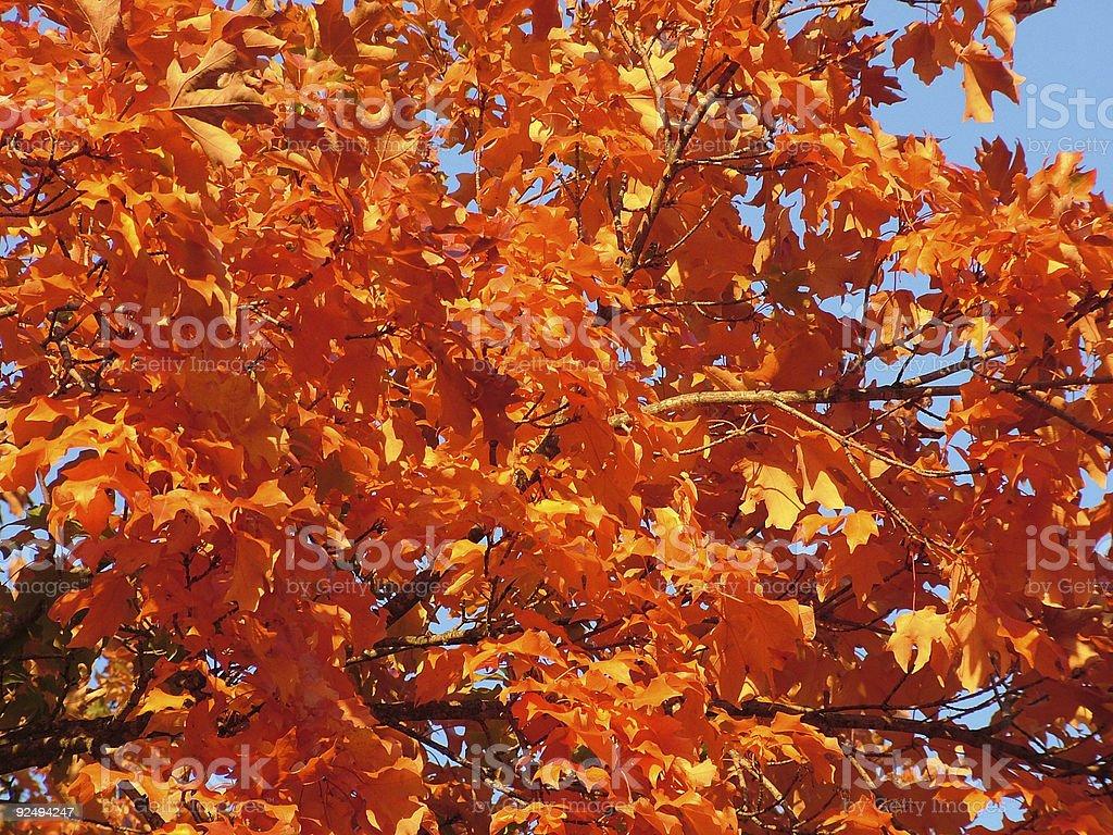 Orange Leaf Detail royalty-free stock photo