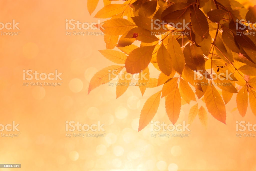 Orange leaf on the branches and soft orange bokeh abstract background stock photo
