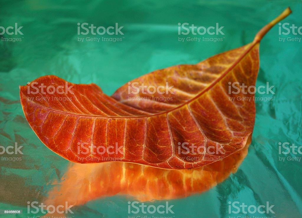 Hoja de naranja foto de stock libre de derechos