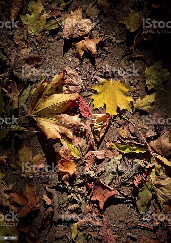 Orange leaves of Autumn - Royalty-free Abstract Stock Photo