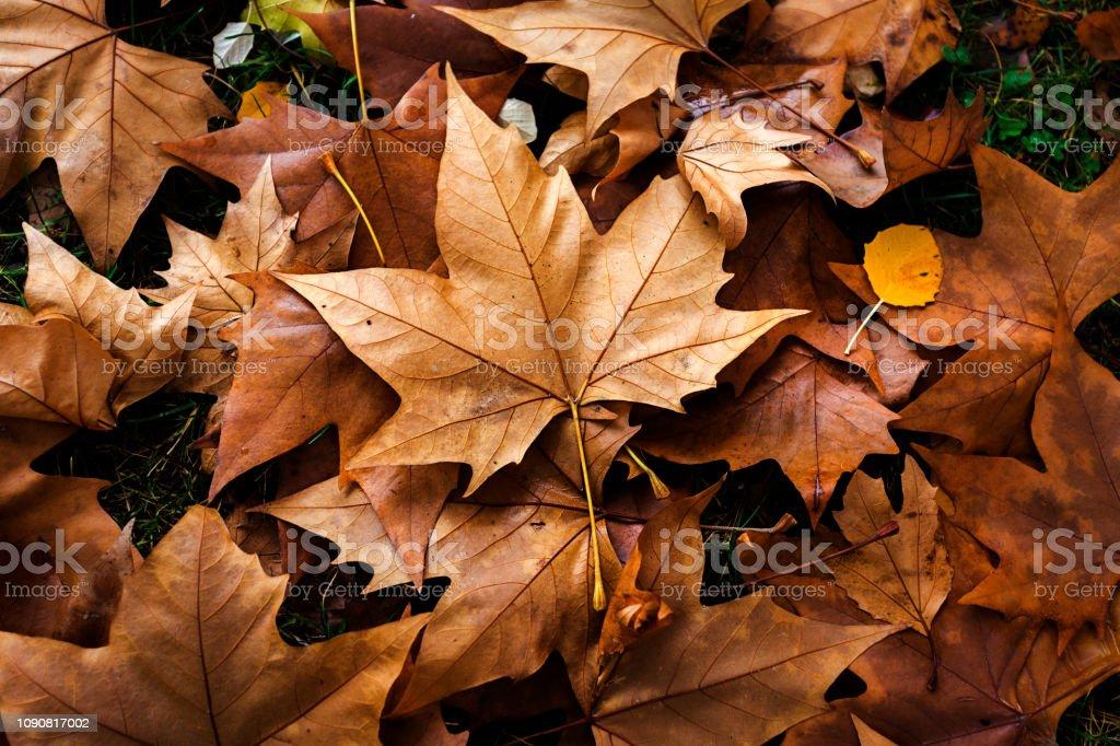 Orange deja en el suelo - foto de stock