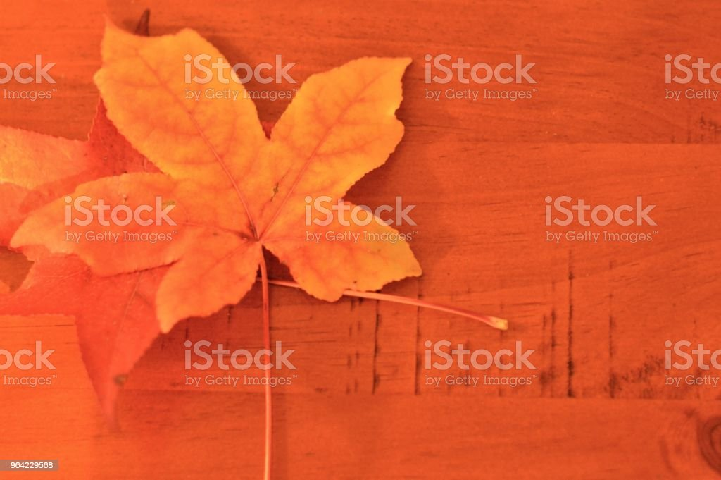 Orange leaves on wooden table stock photo