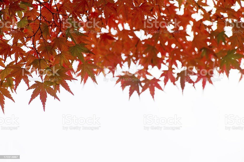Orange leaves royalty-free stock photo