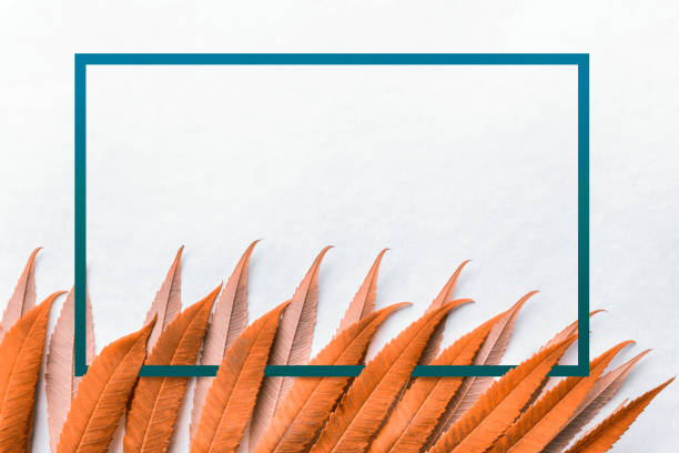 Orange leaves with blue frame stock photo