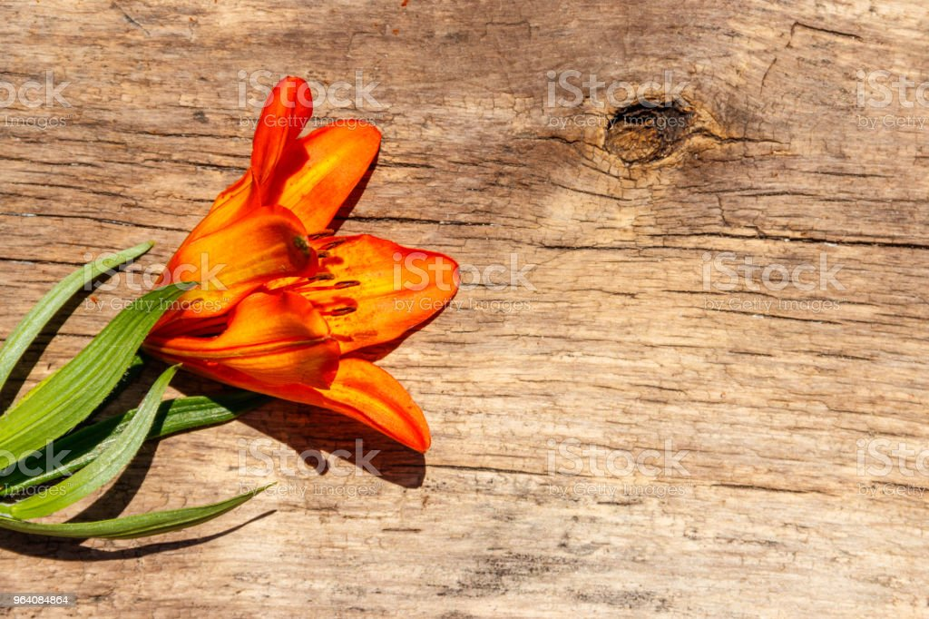 Orange lilies on rustic wooden background - Royalty-free Aging Process Stock Photo