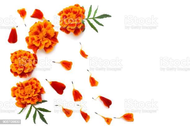 Orange marigold flower tagetes erecta mexican marigold aztec marigold picture id905709830?b=1&k=6&m=905709830&s=612x612&h=hascdf5egfpxkxpt8zywreq5vqa1dxeg02ssolossm4=