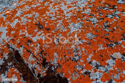 istock orange moss on a background of gray stone 1090573348