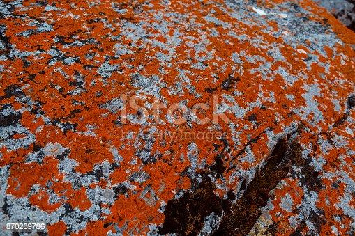 istock orange moss on a background of gray stone 870239786