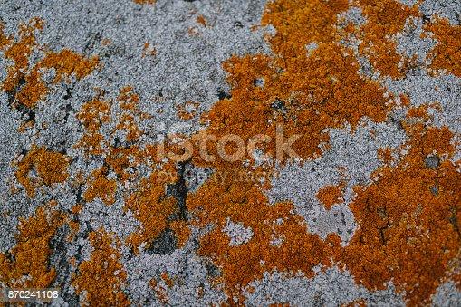 1062226450 istock photo orange moss on a background of gray stone 870241106