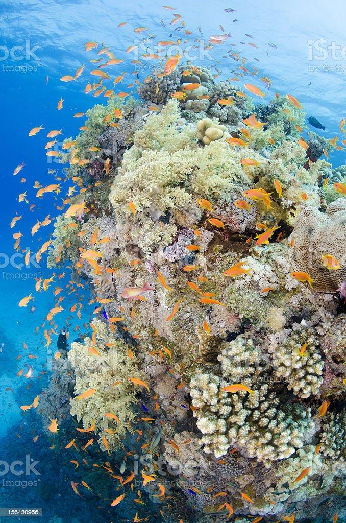 Orange nest stock photo