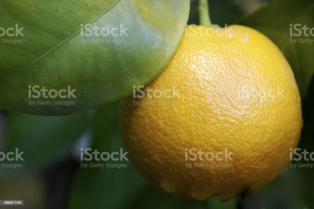 Orange or lemon with leaf royaltyfri bildbanksbilder