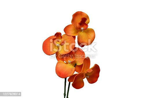 orange orchid on a white background