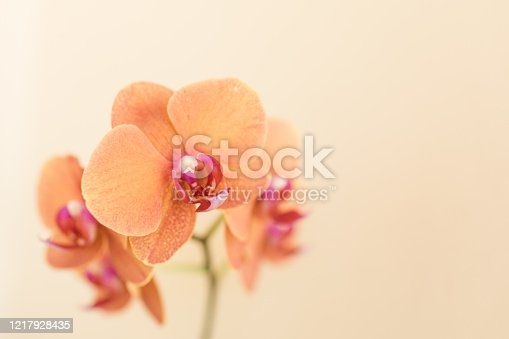 Colorful orange orchid plant in sunny South Florida.