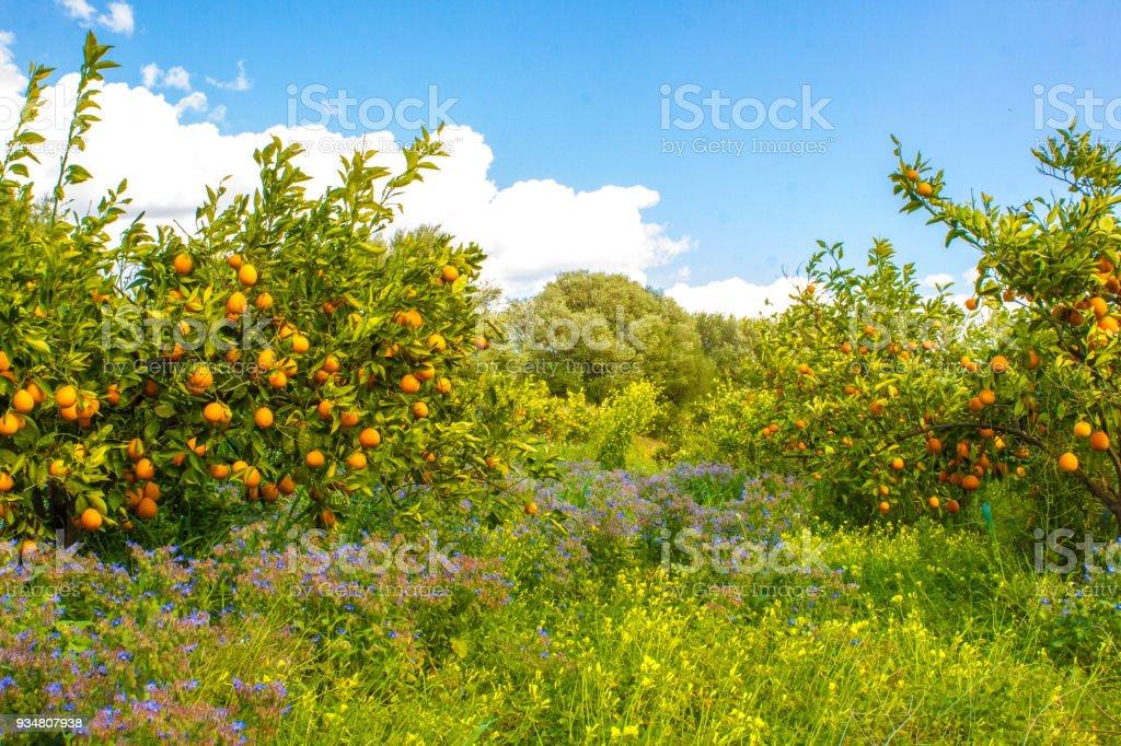 오랑주 연자주색 - 로열티 프리 0명 스톡 사진