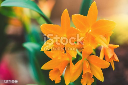 Orange orchids with green leaves