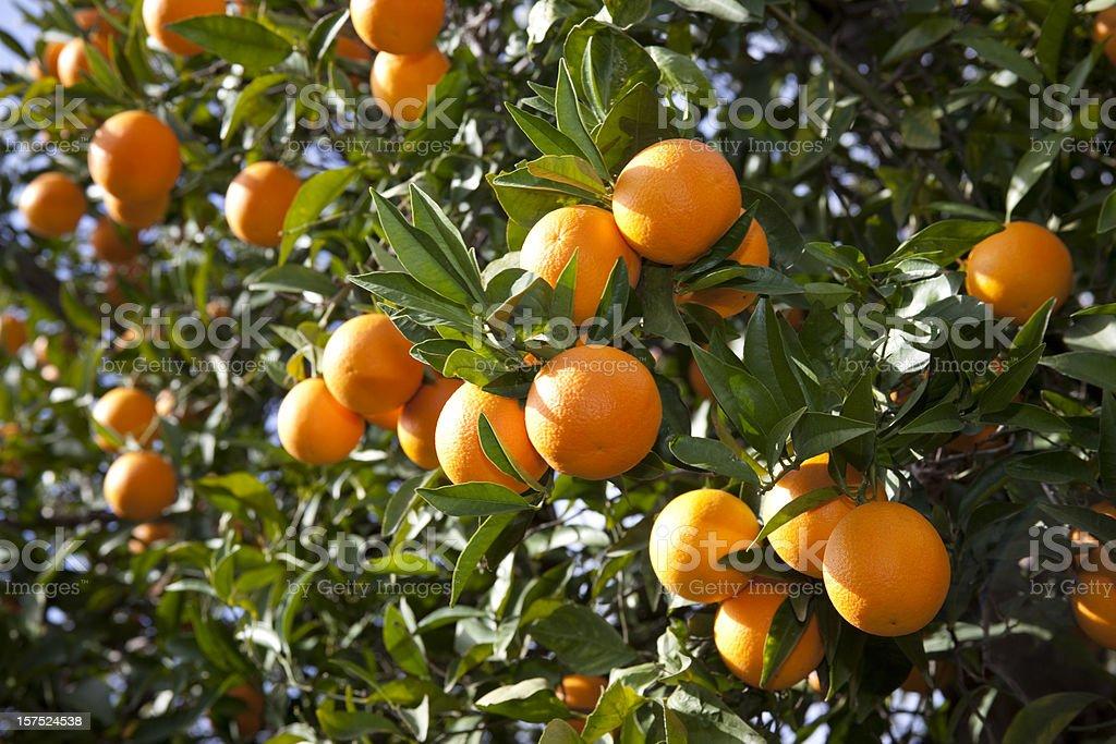 Naranja - foto de stock