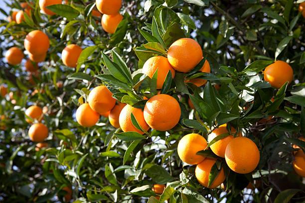 orange - wäldchen stock-fotos und bilder