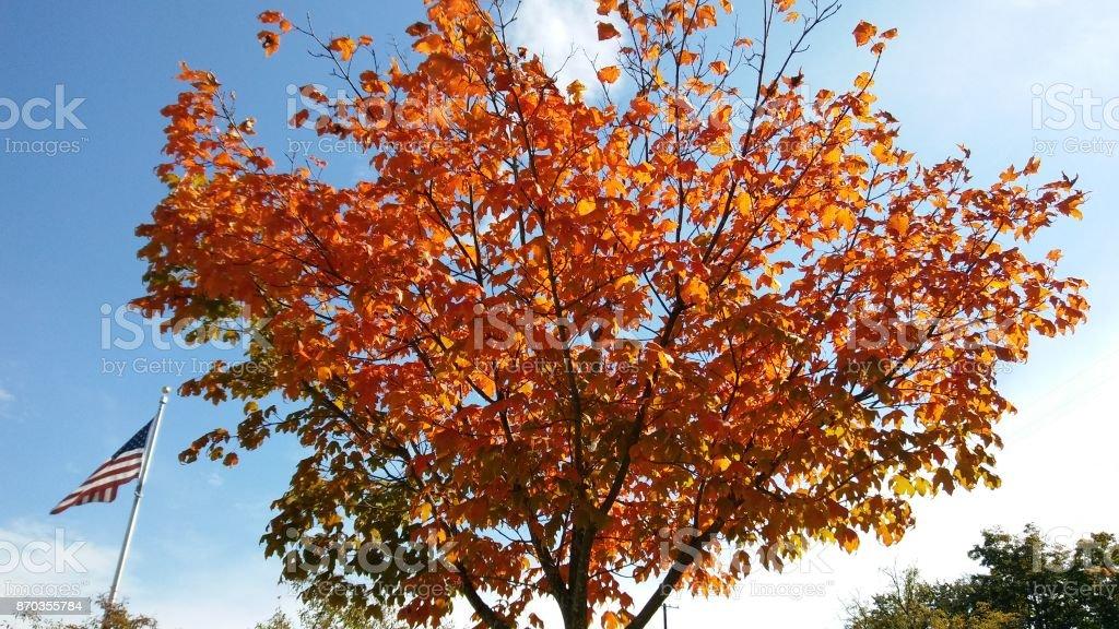 Laranja Orange  - foto de acervo