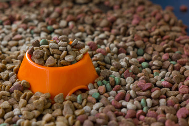 Orange plastic bowl filled with dry pet food surrounded by dry food for cat and dogs. stock photo