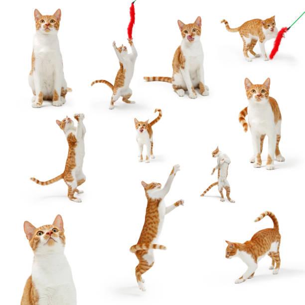 Orange playful cute cate collection picture id1059332100?b=1&k=6&m=1059332100&s=612x612&w=0&h=veoejumtcrm  chum0jlzjsahek1ztmt6ikkaihgdoq=