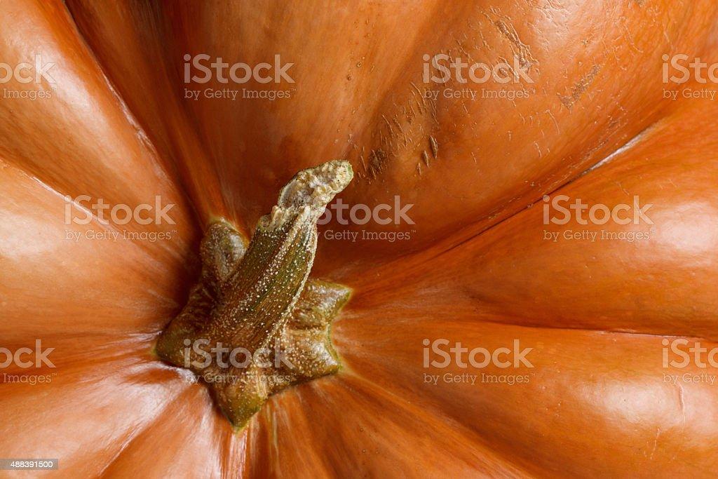 Orange pumpkin background. stock photo