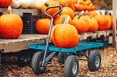 wooden carriage with ripe pumpkins