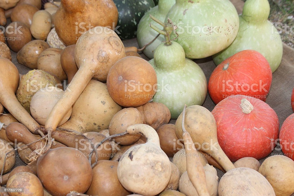orange pumpkins  on sale at the market stock photo
