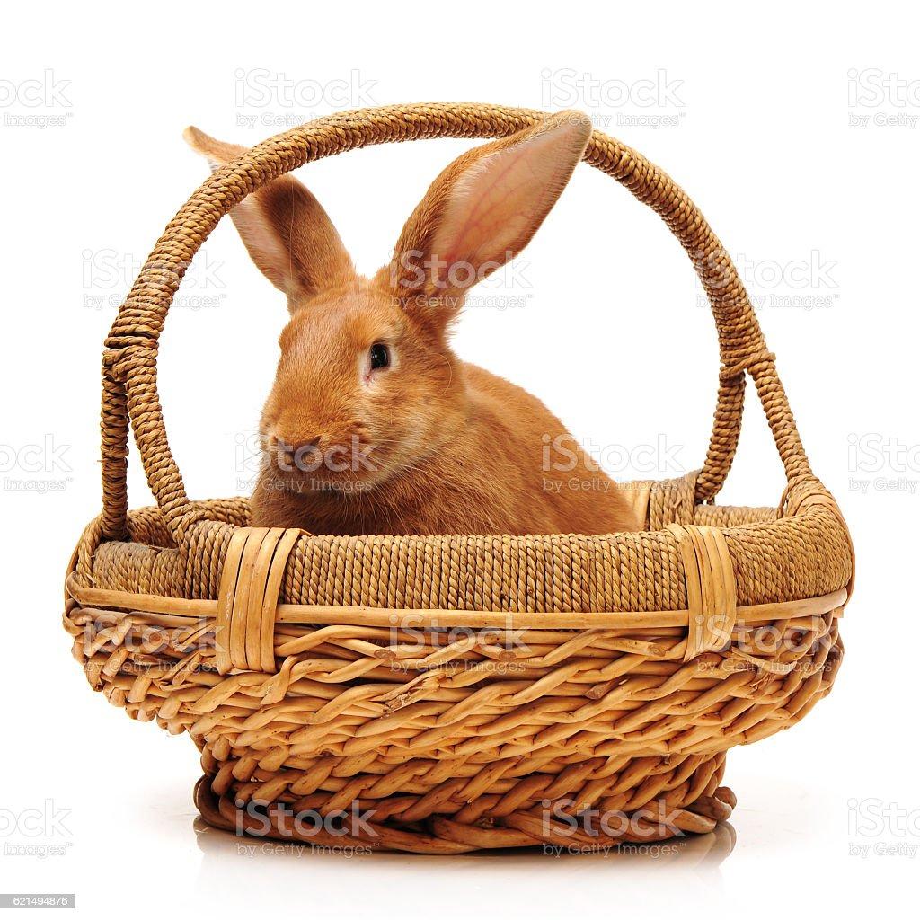 Coniglio arancione foto stock royalty-free